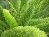Asparagus. Fot. Fotolia