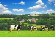 Podatek rolny 2013; podatek leśny 2013 - stawki podatkowe