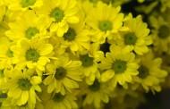 Kwiaciarnia - pomysł